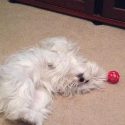 Glitz rolling around with her ball