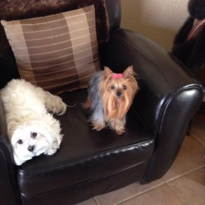 A Tribute to our babies Nicolai our Maltese and Gidget our Yorkie; gone from our lives but never from our hearts