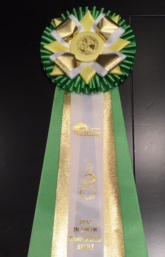 Best in Show Rare Breed Adult March 2017 Ribbon